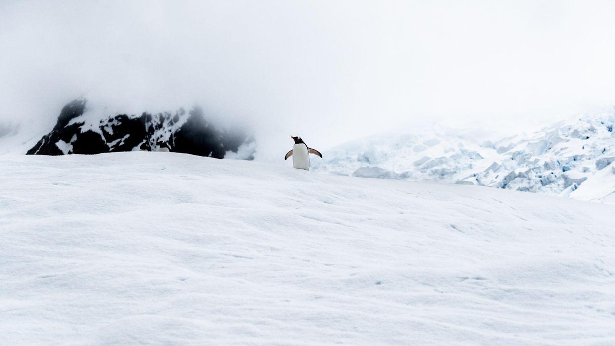 Egy pingvin az Antarktisz egyik jéghegyén