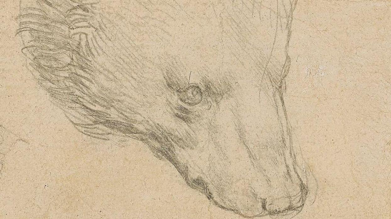 Leonardo da Vince rekordáron elkelt Medvefej című rajza