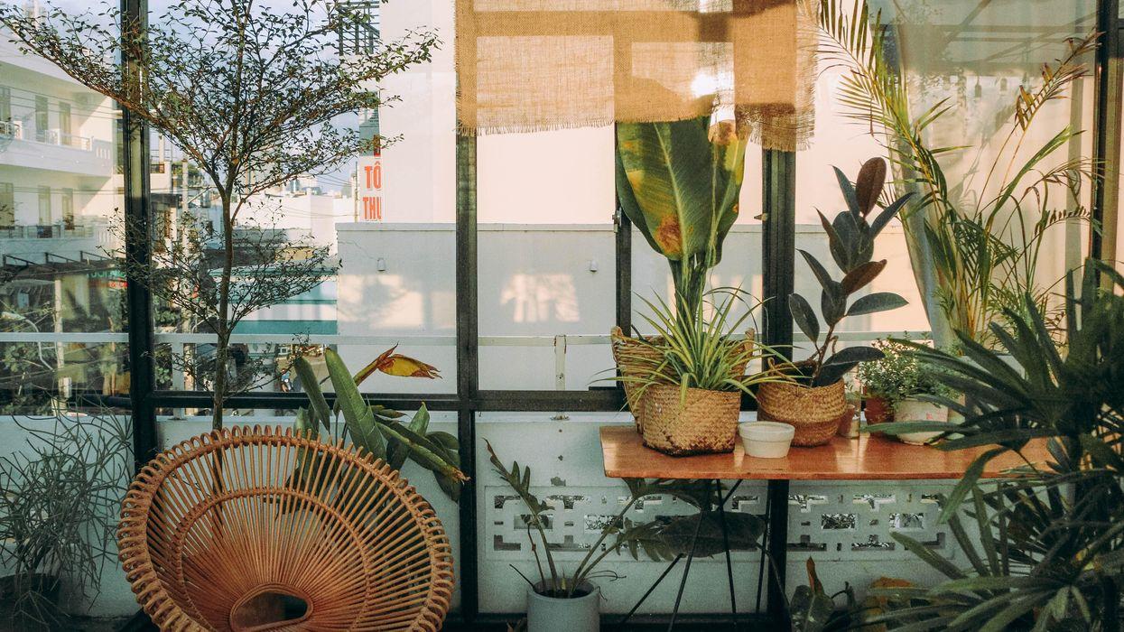 Szobanövények díszítenek egy lakást