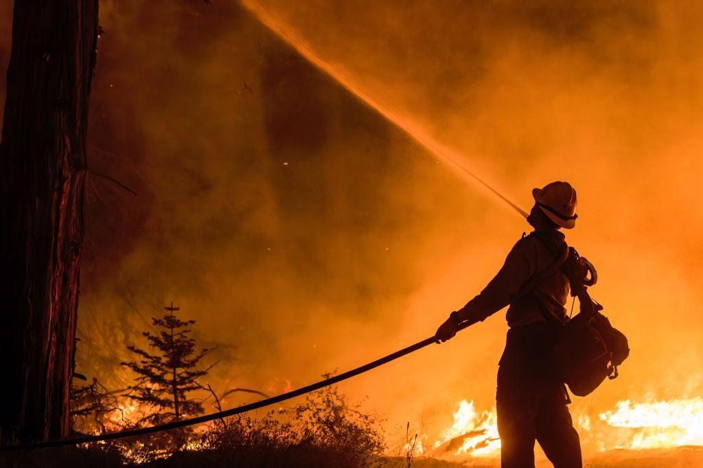 Egy tűzoltó vízzel permetezi a fákat a kaliforniai erdőtüzekben