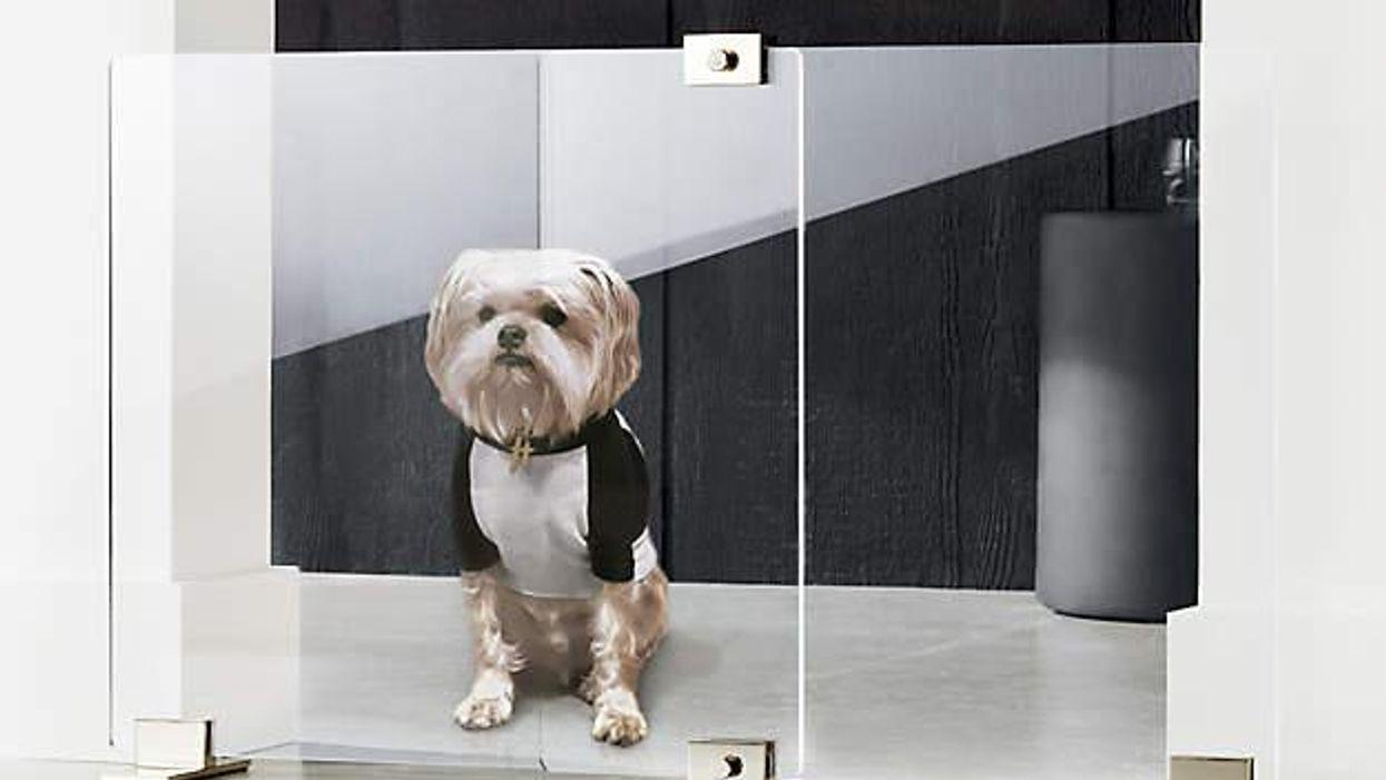 plexifal kutya